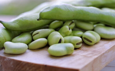 Our origins, and the sustainable power of the bean